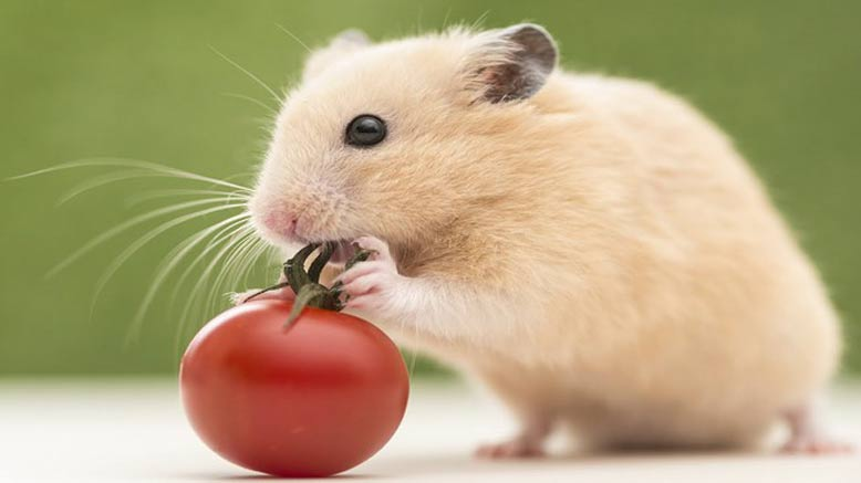 người sinh năm 2020 tuổi con chuột, mệnh thổ