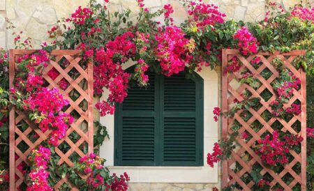 10+ mẫu thiết kế vườn hoa trước nhà ấn tượng cho không gian sống hoàn mỹ